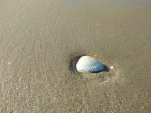 Cáscara del mar en la playa y la arena Fotografía de archivo