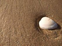 Cáscara del mar en la playa y la arena Fotos de archivo libres de regalías
