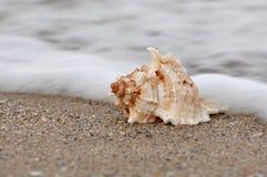 Cáscara del mar en ondas Imagenes de archivo