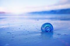 Cáscara del mar del nautilus con las ondas en ight azul suave de la salida del sol Foto de archivo