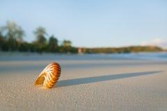 Cáscara del mar del nautilus en la playa perfecta de la arena Fotos de archivo libres de regalías