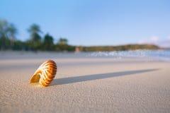 Cáscara del mar del nautilus en la playa perfecta de la arena Imagenes de archivo