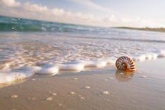 Cáscara del mar del nautilus en onda del mar Imagen de archivo libre de regalías