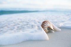 Cáscara del mar del nautilus en onda del mar Fotos de archivo