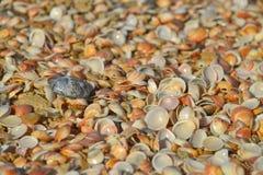 Cáscara del mar y piedra negra Fotos de archivo libres de regalías