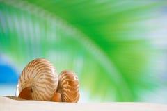 Cáscara del nautilus con la hoja de palma, la playa y el paisaje marino Fotografía de archivo