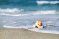 Cáscara del nautilus con la onda del mar, playa de la Florida bajo ligh del sol imagen de archivo