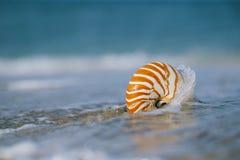 Cáscara del nautilus con la onda del mar, playa de la Florida bajo ligh del sol Foto de archivo libre de regalías