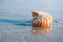 Cáscara del nautilus con la onda del mar, playa de la Florida bajo ligh del sol Foto de archivo