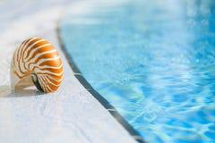 Cáscara del nautilus en el borde de la piscina del centro turístico Imagenes de archivo