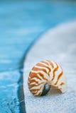 Cáscara del nautilus en el borde de la piscina del centro turístico Imágenes de archivo libres de regalías