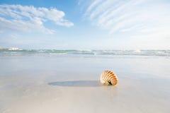 Cáscara del nautilus en la arena blanca de la playa de la Florida bajo luz del sol Imagenes de archivo