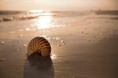 Cáscara del nautilus en una arena de la playa del océano del mar con la luz oscura de la puesta del sol fotos de archivo libres de regalías