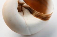 Cáscara espiral foto de archivo libre de regalías