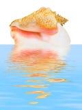 Cáscara espiral del mar en agua Fotos de archivo