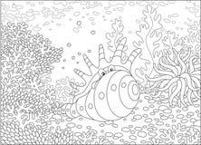 Cáscara exótica entre corales Imagen de archivo libre de regalías