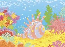 Cáscara exótica entre corales Foto de archivo