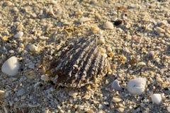 Cáscara grande con millares de pequeñas cáscaras en la playa Fotos de archivo