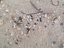 Cáscara hermosa de los crustáceos Fotos de archivo