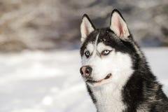 Cáscara masculina al aire libre en un bosque nevoso Imagenes de archivo