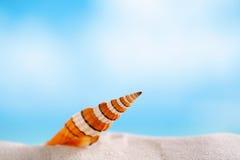 Cáscara pelada del mar del payaso con el océano, la playa y el paisaje marino Foto de archivo