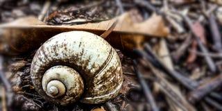 Cáscara seca de la concha en el bosque fotos de archivo