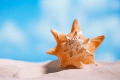 Cáscara tropical del mar de la concha marina con el océano, la playa y el paisaje marino Imagen de archivo