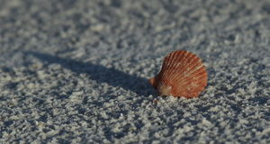 Cáscara y arena del mar Foto de archivo