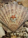Cáscara y estrellas de mar del mar Foto de archivo
