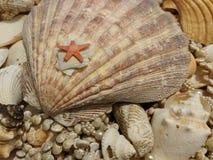 Cáscara y estrellas de mar del mar Foto de archivo libre de regalías
