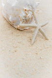 Cáscara y estrellas de mar del mar en fondo tropical de la playa y del mar Foto de archivo