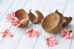 Cáscara y flores del coco Fotografía de archivo libre de regalías