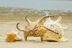 Cáscara y playa hermosas Foto de archivo libre de regalías