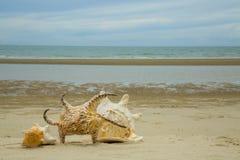 Cáscara y playa hermosas Imagenes de archivo