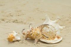 Cáscara y playa hermosas Fotos de archivo libres de regalías