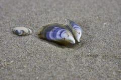 Cáscaras azules del mar Imagen de archivo