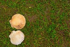 Cáscaras blancas grandes en un fondo de la hierba verde Foto de archivo
