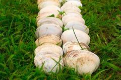 Cáscaras blancas grandes en un fondo de la hierba verde Foto de archivo libre de regalías