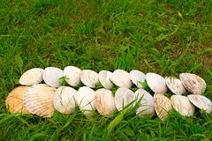 Cáscaras blancas grandes en un fondo de la hierba verde Fotos de archivo