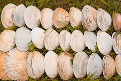 Cáscaras blancas grandes en un fondo de la hierba verde Fotos de archivo libres de regalías