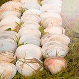 Cáscaras blancas grandes en un fondo de la hierba verde Imagen de archivo libre de regalías