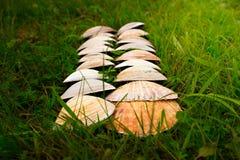Cáscaras blancas grandes en un fondo de la hierba verde Imagenes de archivo