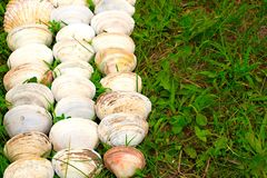Cáscaras blancas grandes en un fondo de la hierba verde Imágenes de archivo libres de regalías