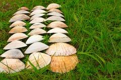 Cáscaras blancas grandes en un fondo de la hierba verde Fotografía de archivo libre de regalías