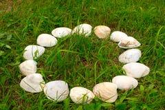Cáscaras blancas grandes en un fondo de la hierba verde Imagen de archivo
