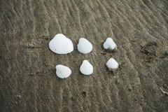 Cáscaras blancas hermosas en la playa fotos de archivo