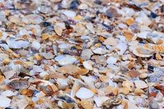 Cáscaras coloridas en fondo de la naturaleza Porciones de diversa concha marina Imagen de archivo libre de regalías