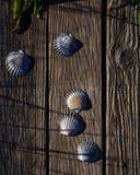 Cáscaras de concha de peregrino en la madera resistida Fotos de archivo