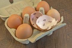Cáscaras de huevo Imagen de archivo libre de regalías