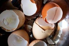 Cáscaras de huevo Foto de archivo libre de regalías